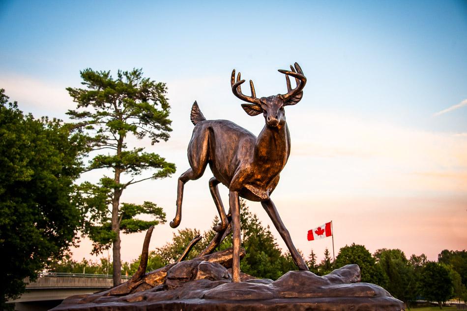 The Buckhorn Buck statue