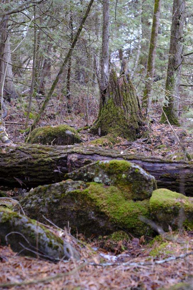 Fuji XT2 Pentax Asahi 55mm F1.8 - Moss on stump and rocks in the woods