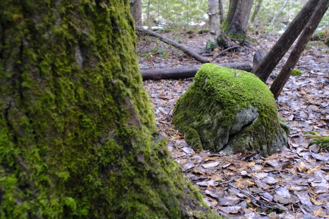 Canon FD 24mm F2.8 - Moss, Tree and Rock
